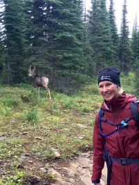 Getting up close with the deer in Glacier National Park.
